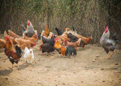 Αγρόκτημα Πλατανόρεμα